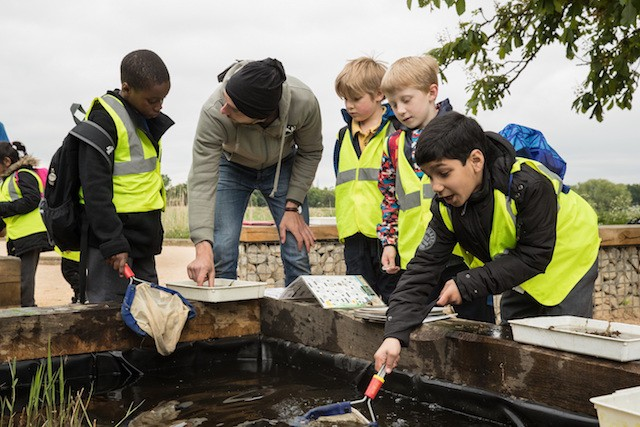 Primary School Pond Dipping (c) Penny Dixie
